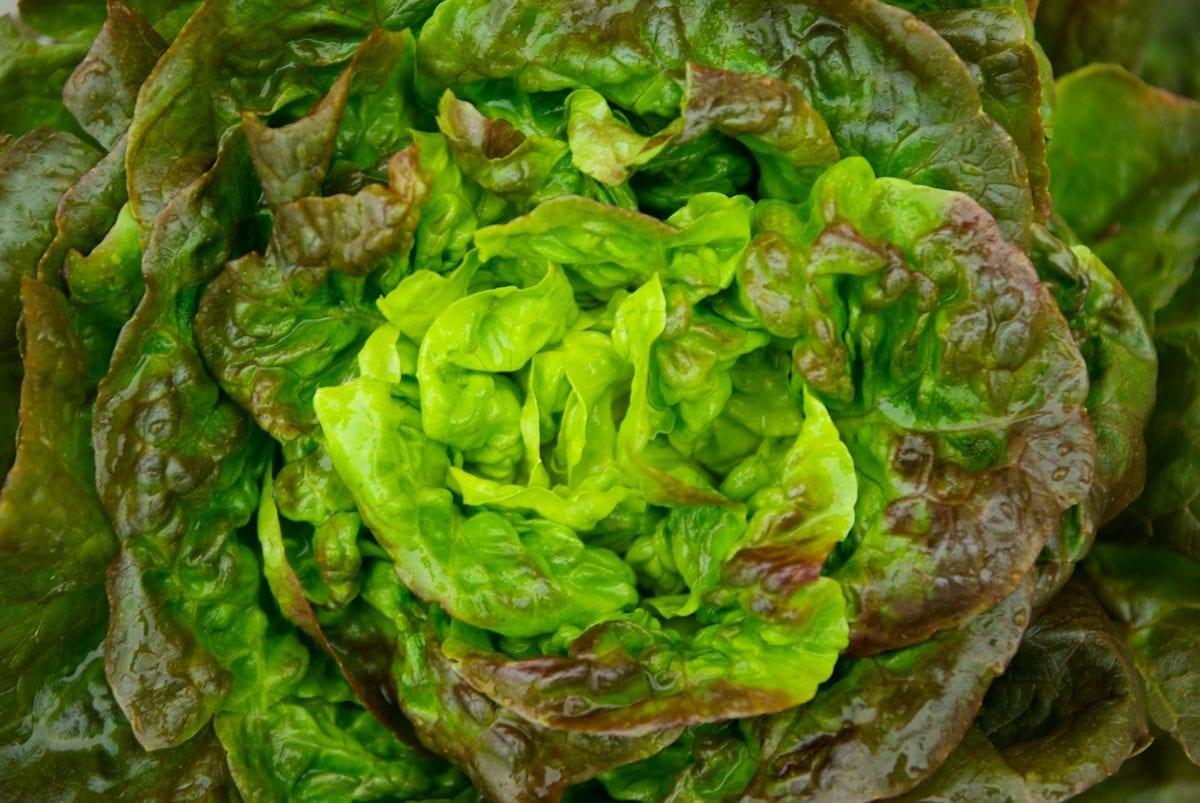 die ganze Wahrheit über Salat