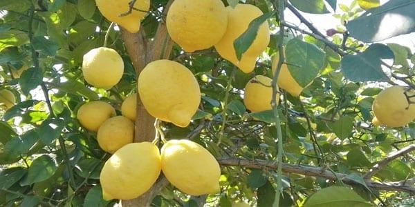 Naranjas por la red