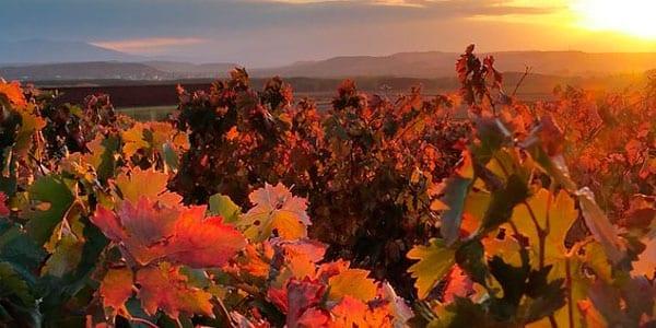 Ventas de la DOCa Rioja cosecha DO Rioja