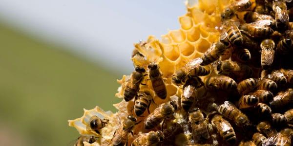 tecnología aplicada a la apicultura restaurante lienzo postre miel