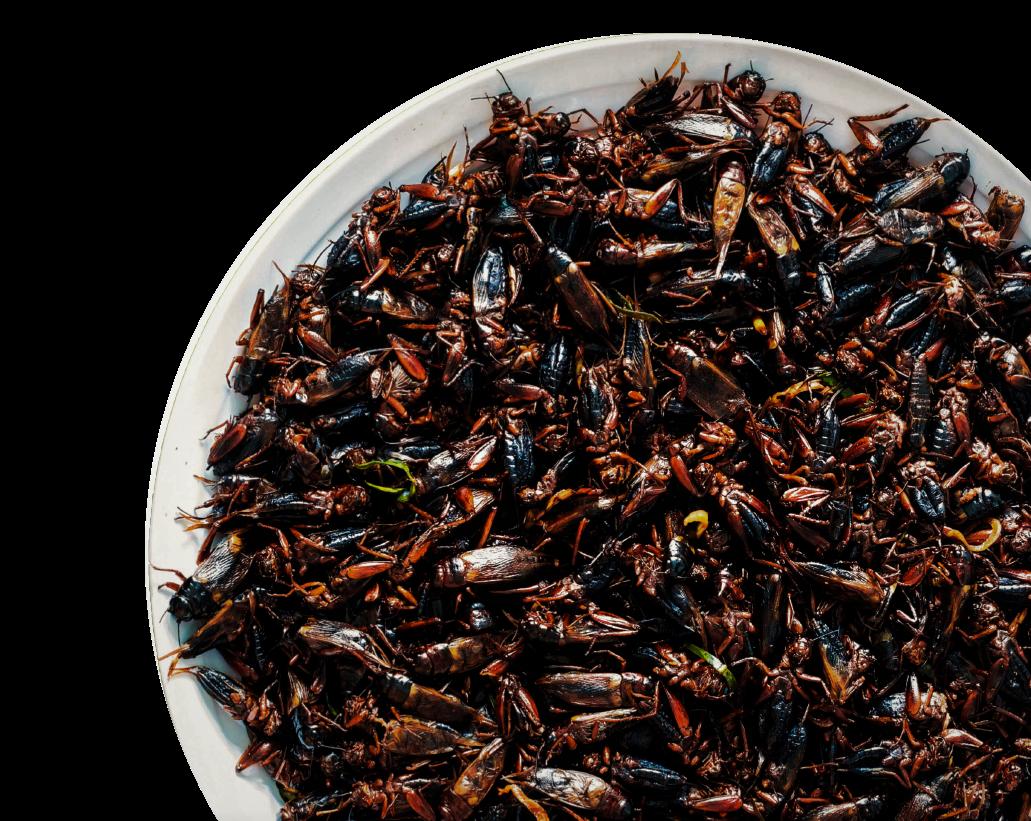grillos y larvas en alimentos de Tazebaez