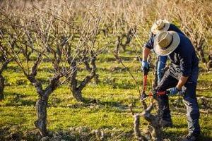 cosecha 2018 de Rioja