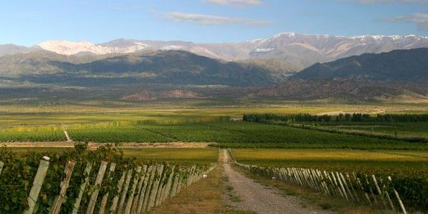 San Juan é uma terra de vinhos