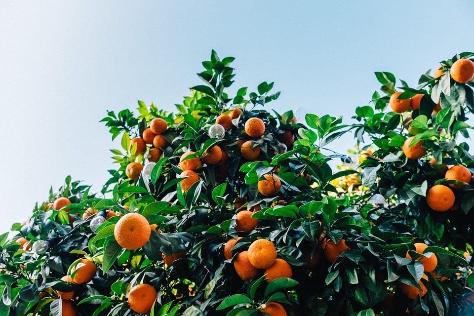 ginebra La Caña 3 mandarinas