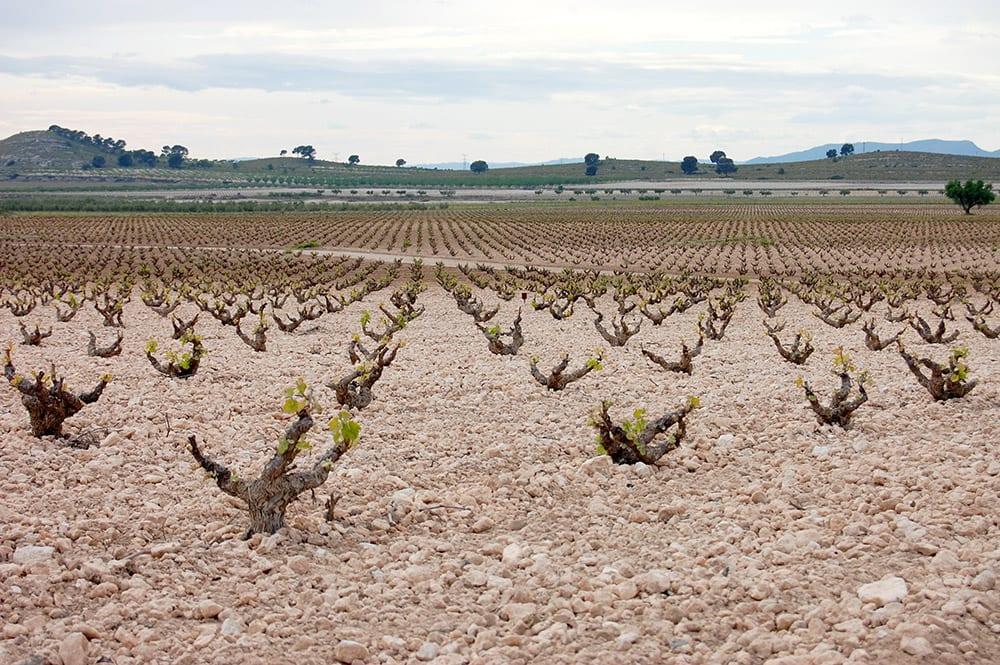 dop jumilla y vinos ecológicos