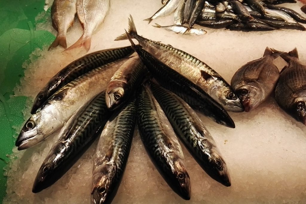 pescados información gastronómica