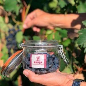 vendimia de La Rioja uvas bote Rioja Alavesa/DOCa Rioja