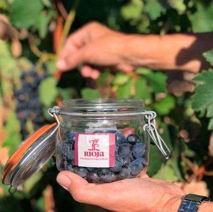 vendimia de La Rioja uvas bote Rioja Alavesa