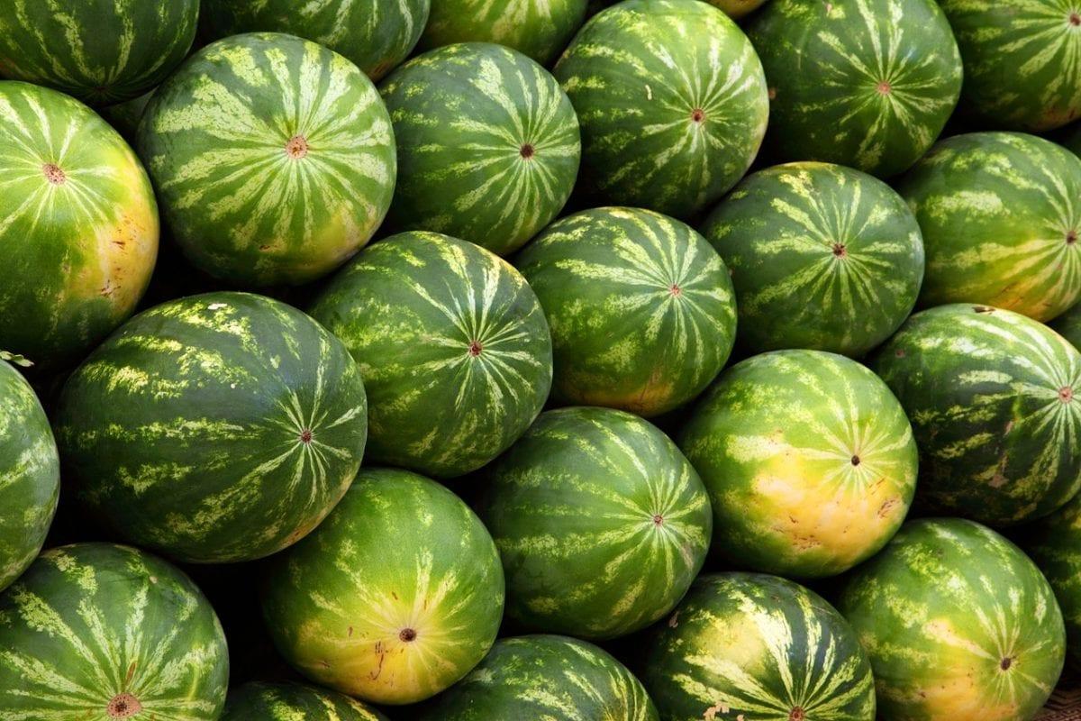 previsiones del melón y la sandía