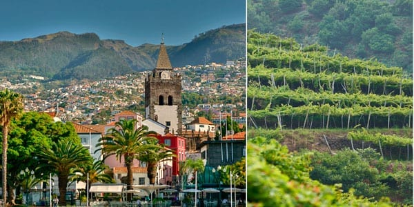 Frutas y vinos de Madeira