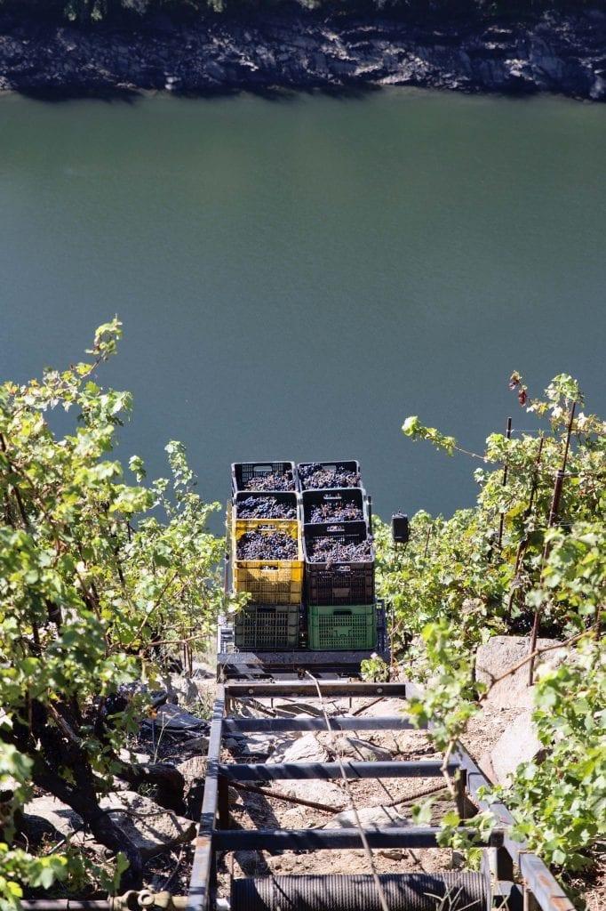 vendimia cajas uva