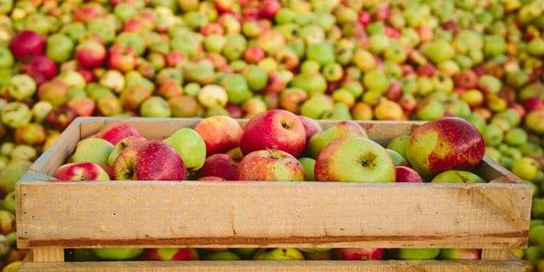 sidra gallega manzanas fermentadas