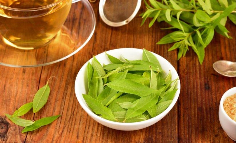 infusiones para exámenes hierba luisa té