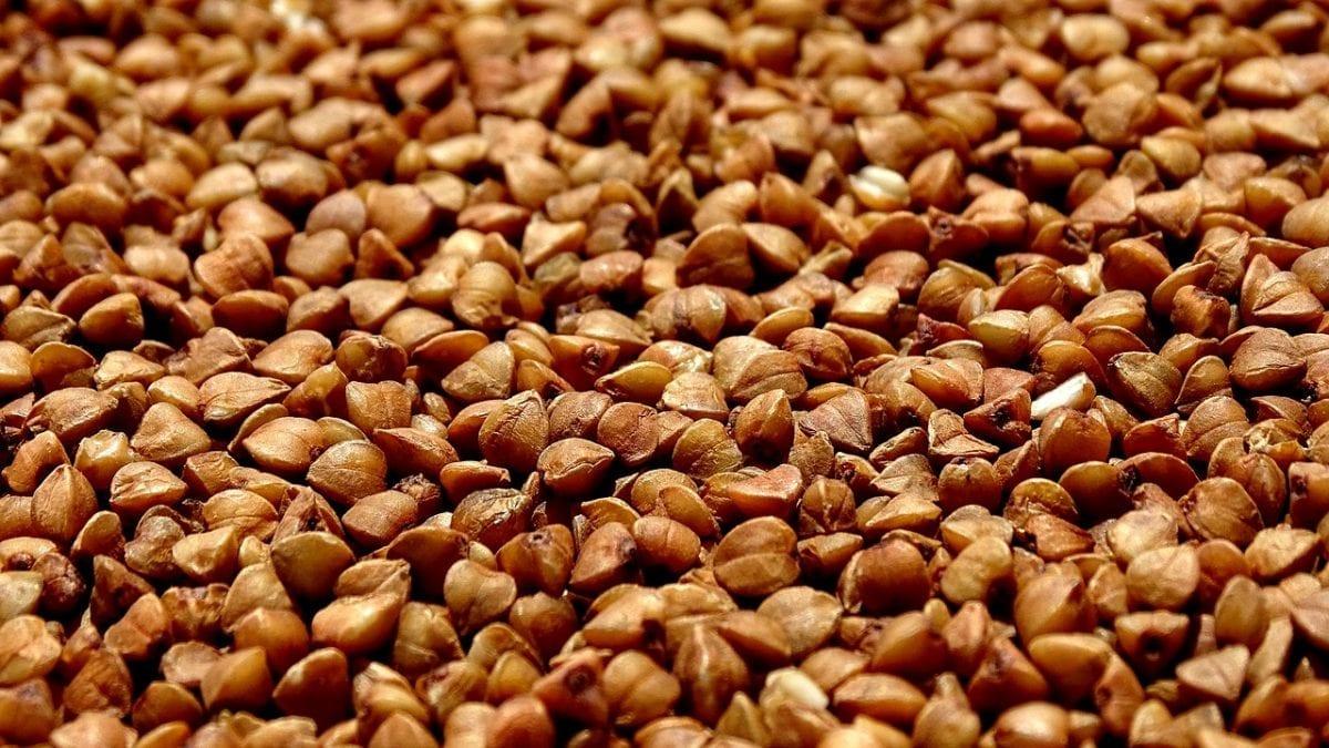 trigo sarraceno para celiacos cereales