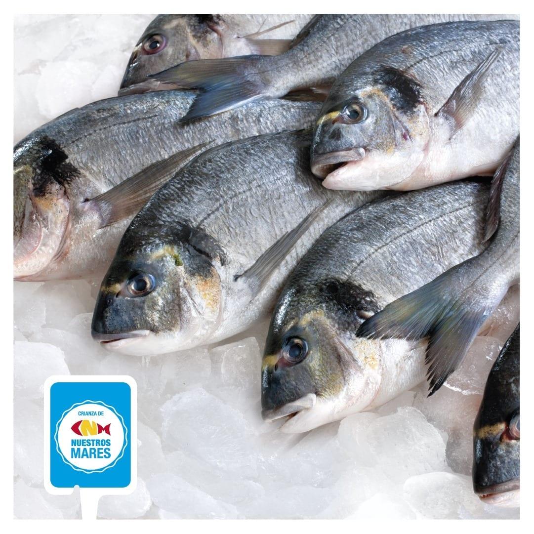 Crianza de Nuestros Mares pescados de acuicultura