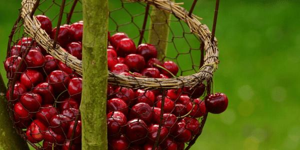 pequeñas delicias rojas