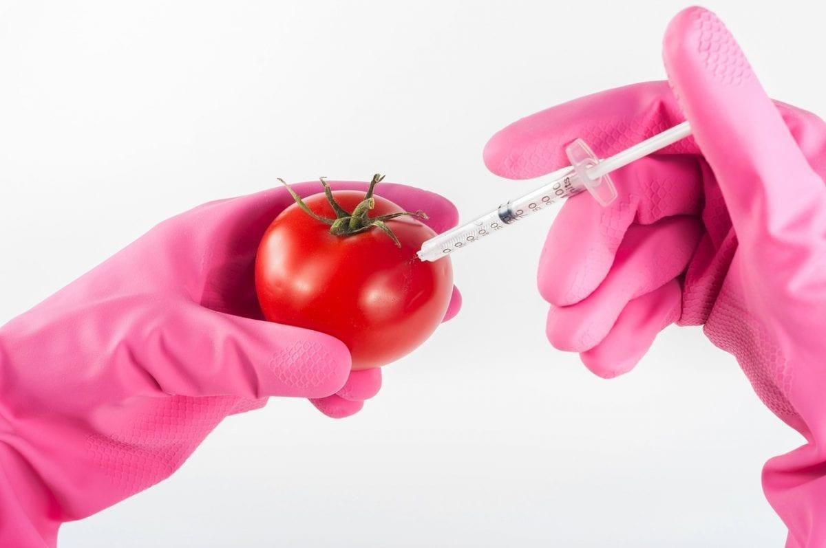 Tomate jeringuilla/Tomate para hipertensos