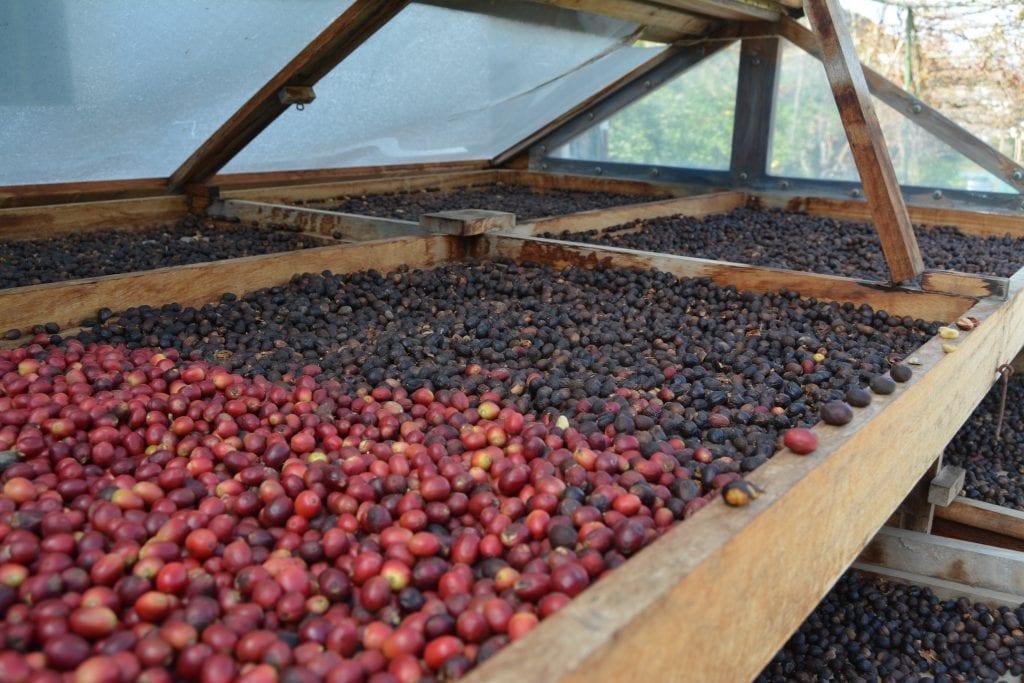 Valle de Agaete café