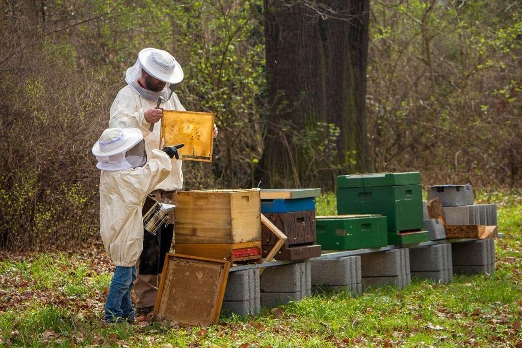 apicultores colmenas abejas