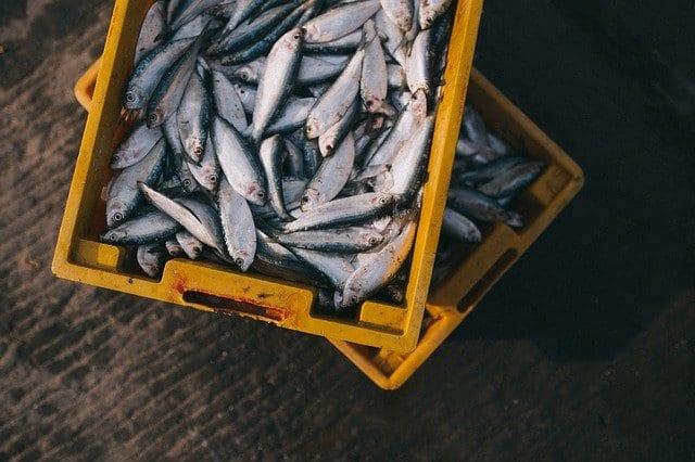 Aumento do consumo de pescado na Espanha