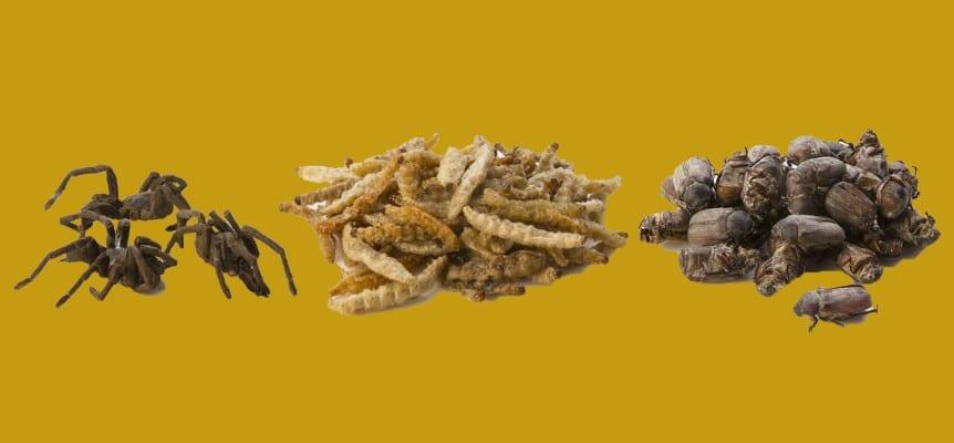 inseto insetos comestíveis na espanha