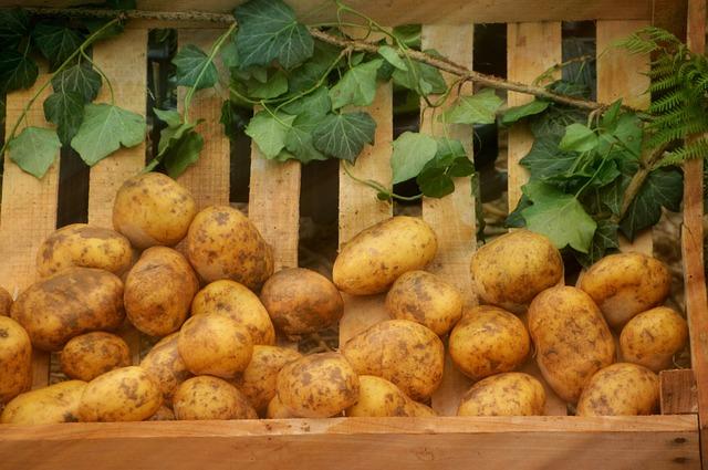 Patatas sobre tablas de madera