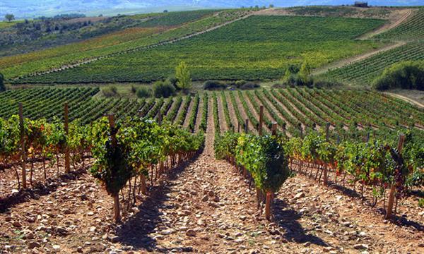 variedades de uva recuperadas