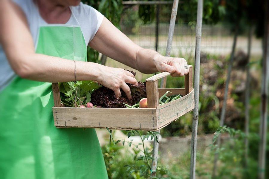 Mujer con cesta plataforma agraria raíces