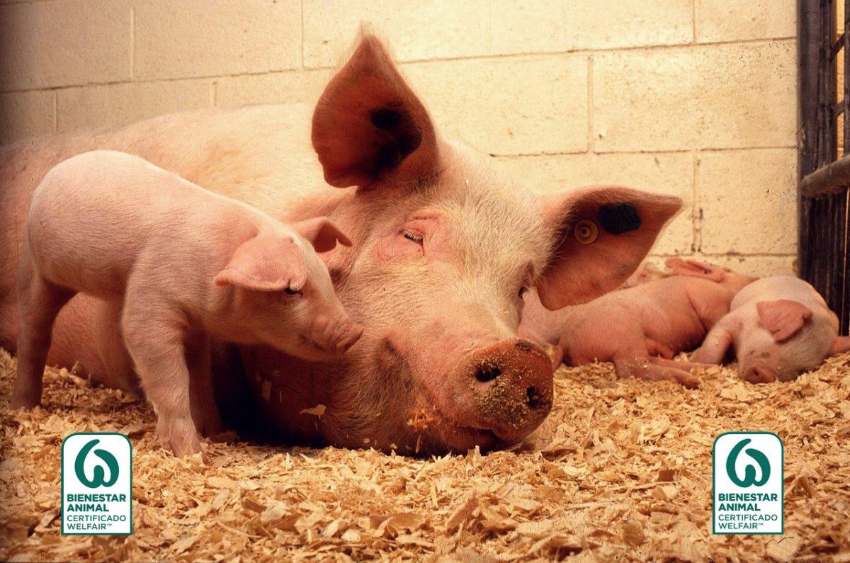 qué es el sello WelfairTM cerdos