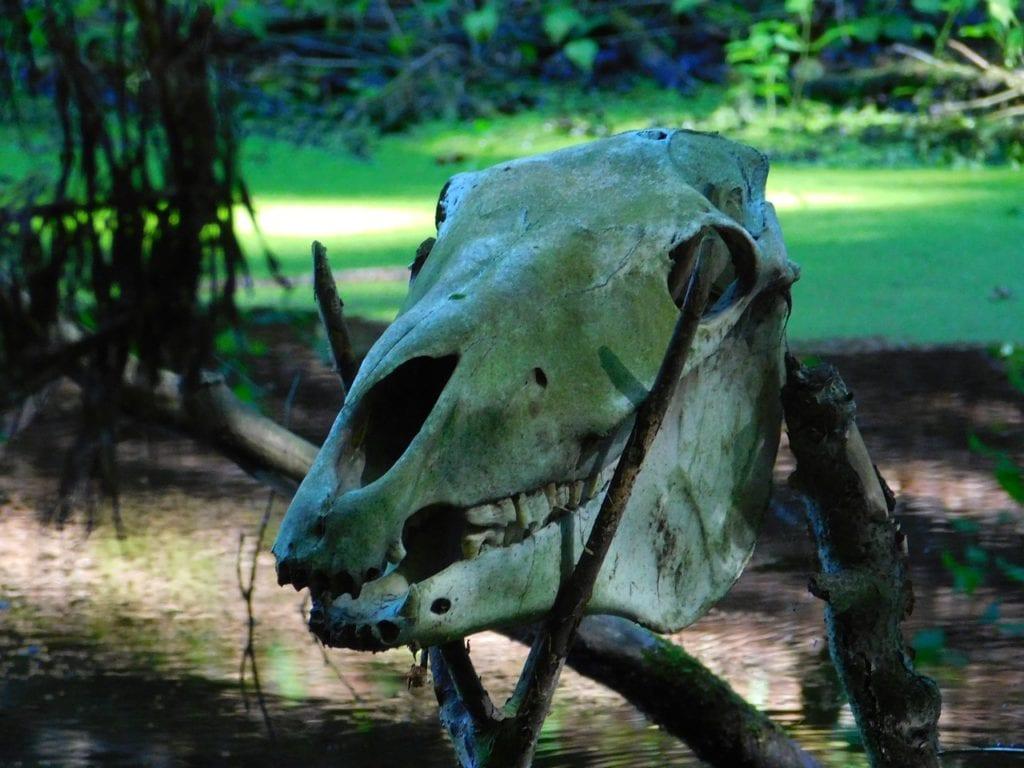 la paleobasura cráneo