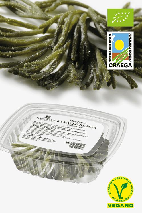 alga codium