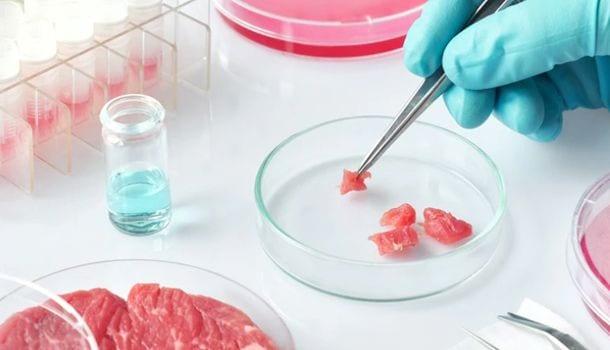 Carne cultivada en España