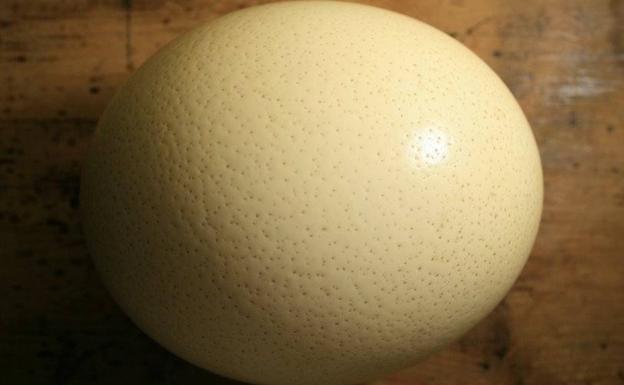 Huevo de avestruz. Foto:Pixabay