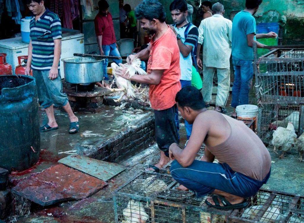 mercado de animais vivos
