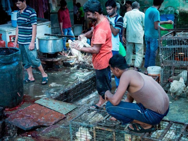 mercado de animales vivos