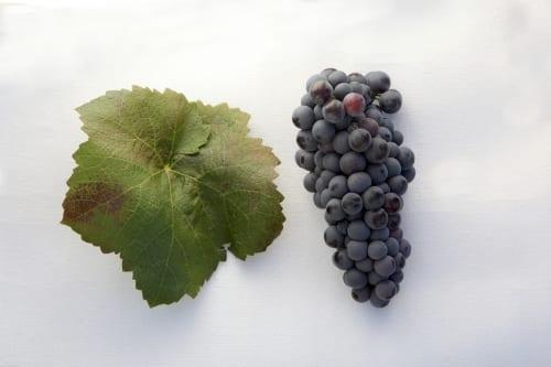 Weine aus Ribera del Júcar