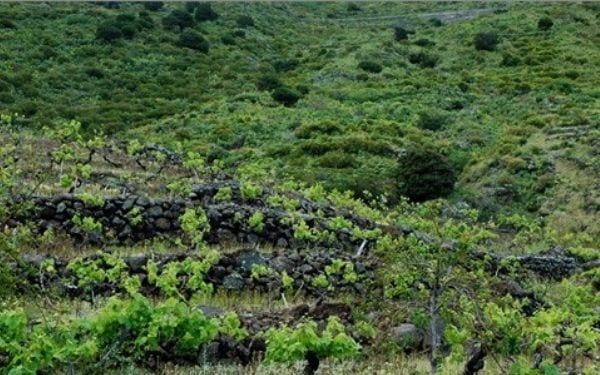 Viñas El Hierro. Foto: AMN