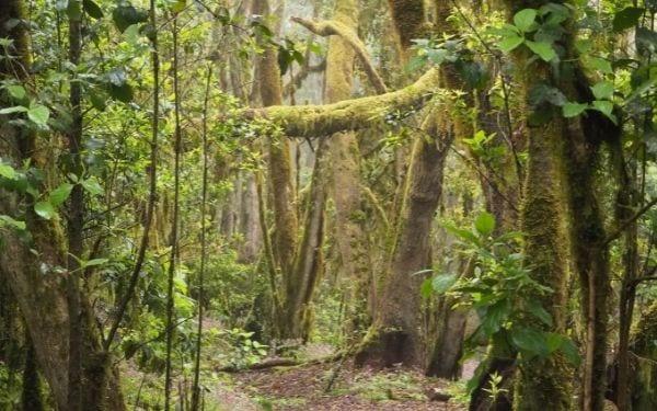 Parque Nacional Garojanay. Foto: Monica Uriel