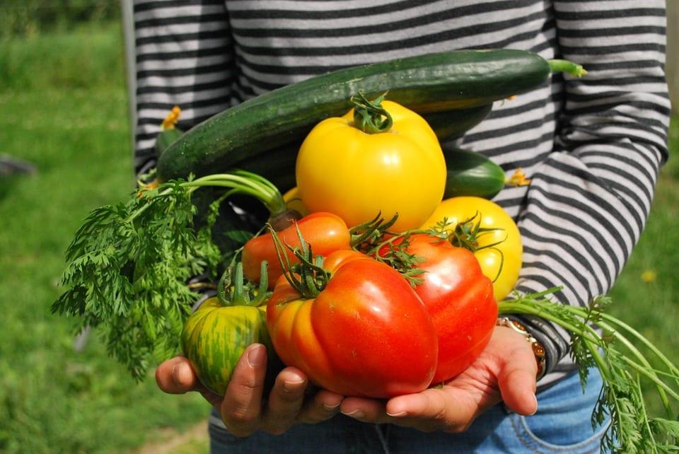 Alimentos ecológicos en la infancia