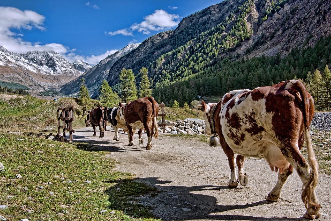 el aumento de la producción ecológica se ve reflejado también en la ganadería