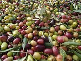 Hacer aceite de oliva en casa