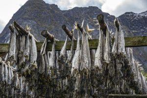 secado tradicional de pescado en Noruega