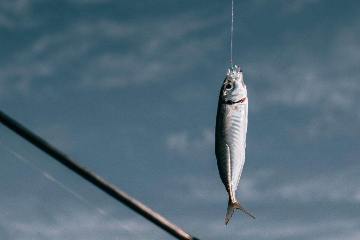 peixe em norueguês